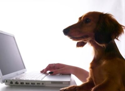 Auch Waldi kann ins Netz - wir machens möglich *grins*